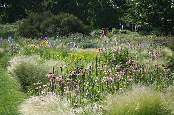 Garden design Horsham - Paul Lehmann